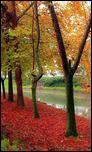 3514633_Trikala__trees_and_the_river_2.jpg